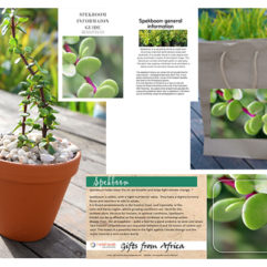 Inspired Living Shop Online Spekboom Gift Pack Product